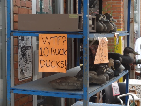 10 buck ducks